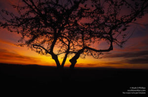 Dante's Tree: Brilliant sunset behind lone tree in Amherst, MA. Printed on  Silky Gloss paper