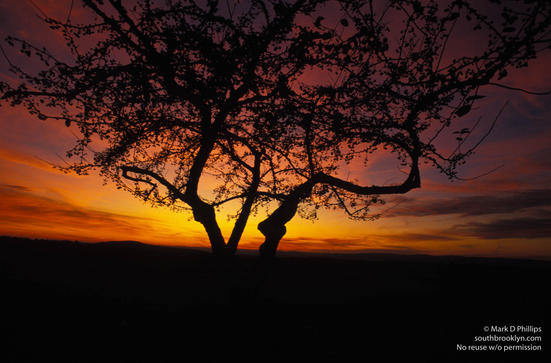 Dante's Tree
