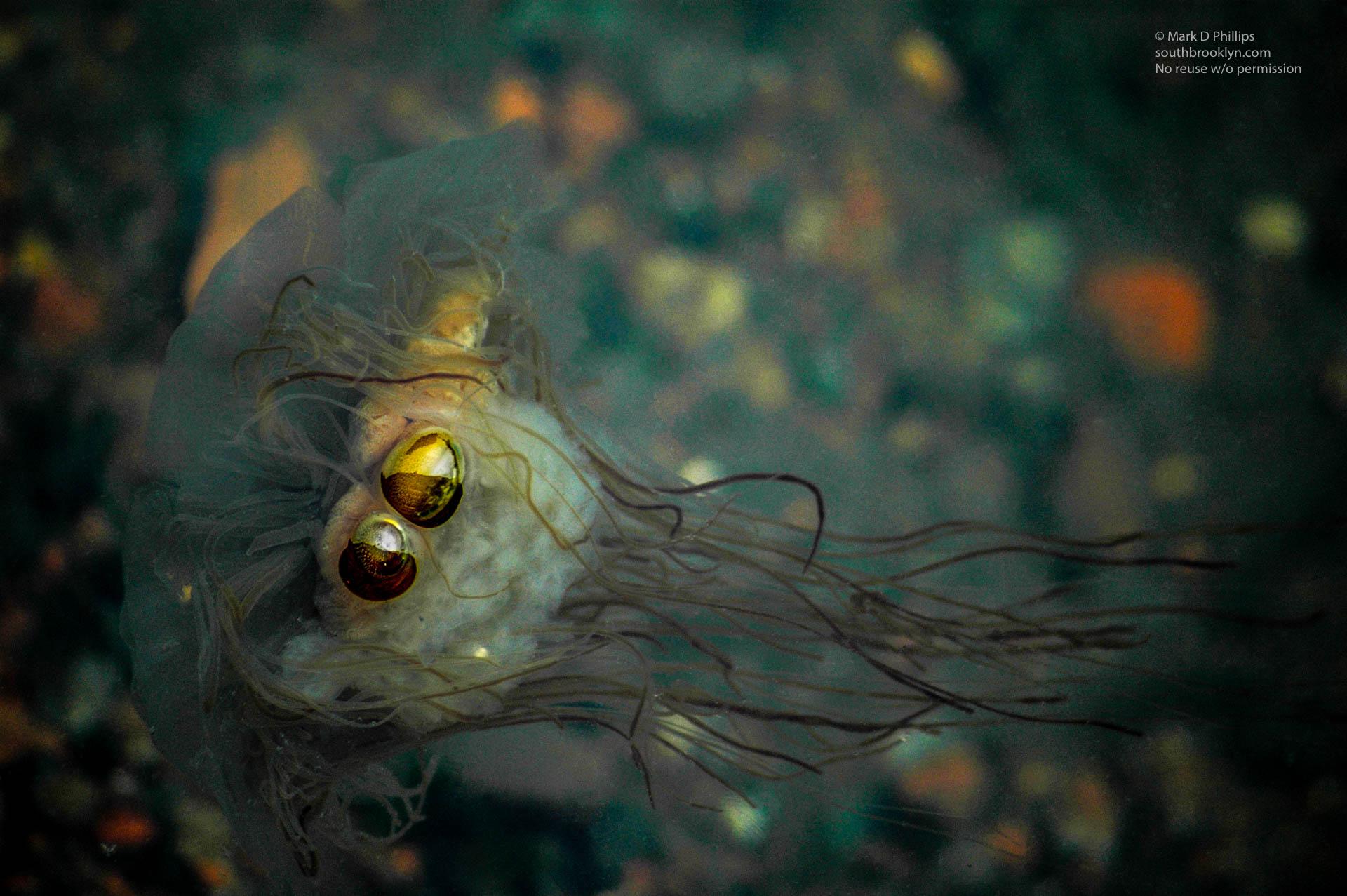Strange Jellyfish