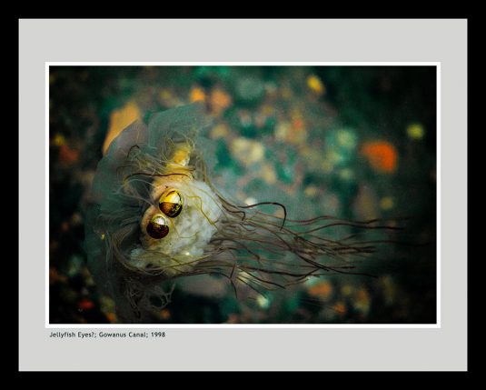 Jellyfish Eyes? ©Mark D Phillips